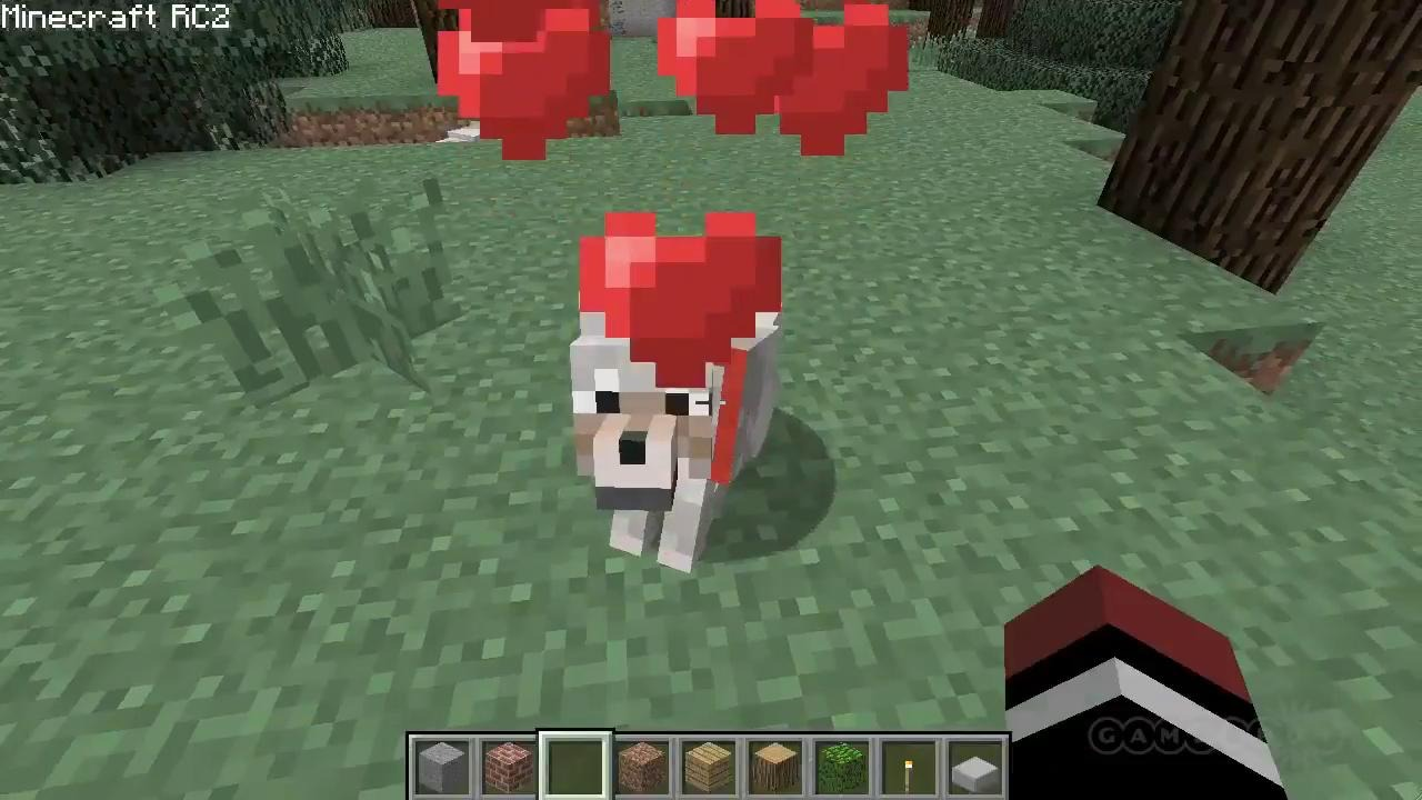 Can You Tame A Wolf In Survival Craft